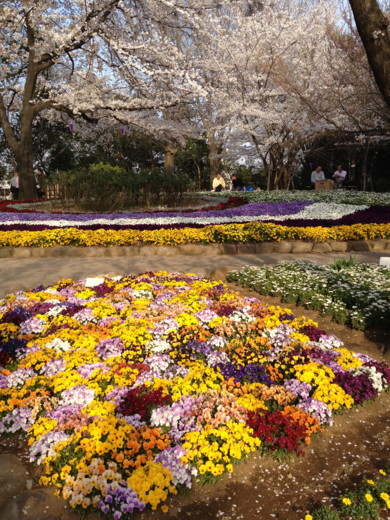 f:id:torimusi:20120412014251j:image
