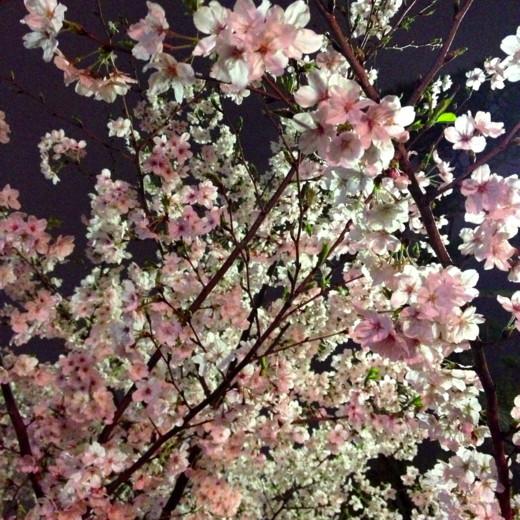 f:id:torimusi:20130502005925j:image