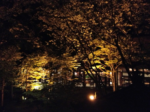 f:id:torimusi:20130907224642j:image