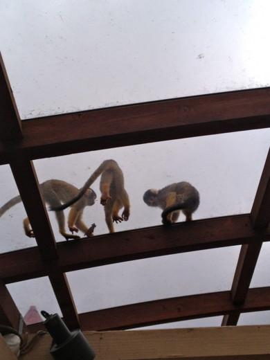 f:id:torimusi:20130907230114j:image