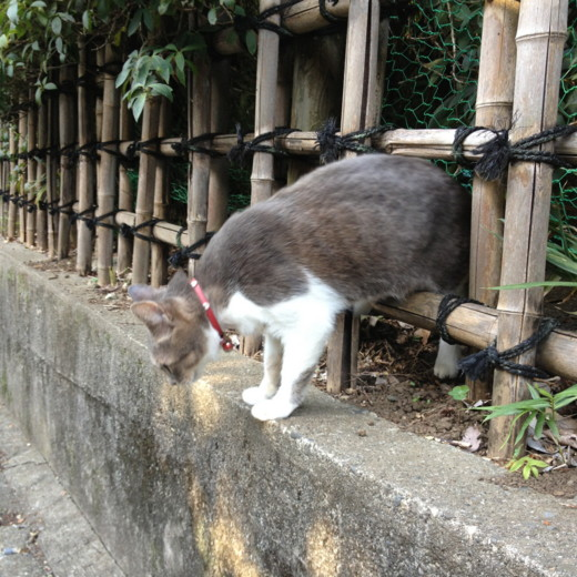 f:id:torimusi:20131012211132j:image