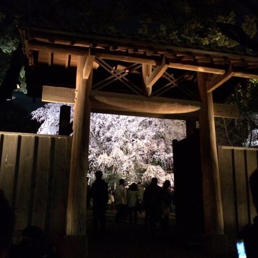 f:id:torimusi:20140330215231j:image