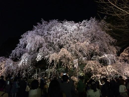 f:id:torimusi:20140330215232j:image