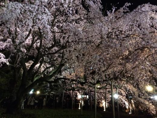 f:id:torimusi:20140330215234j:image