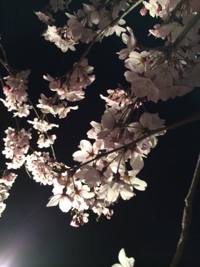 f:id:torimusi:20140330215235j:image