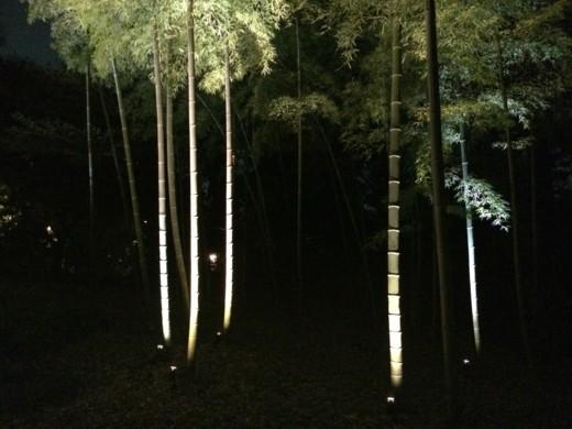 f:id:torimusi:20140330215237j:image