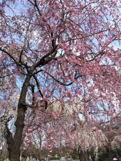 f:id:torimusi:20140330215242j:image