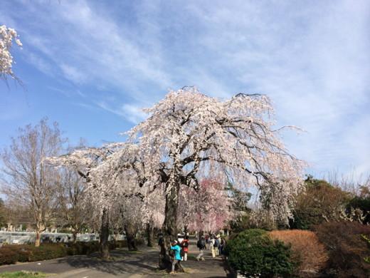 f:id:torimusi:20140330215244j:image