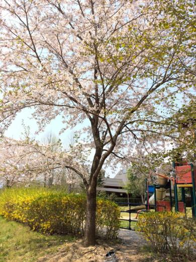 f:id:torimusi:20140428183327j:image