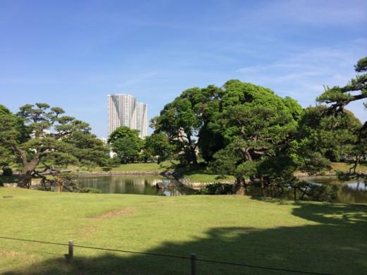 f:id:torimusi:20140616002403j:image