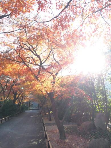 f:id:torimusi:20141227095419j:image