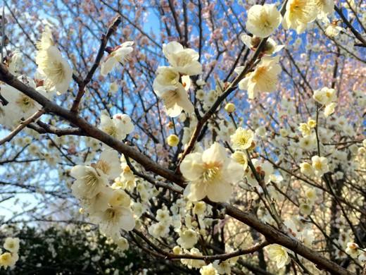 f:id:torimusi:20160218114841j:image