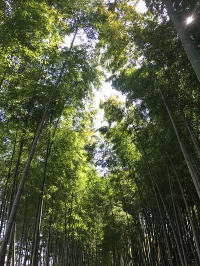 f:id:torimusi:20160329110852j:image