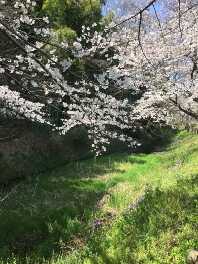 f:id:torimusi:20160329112137j:image