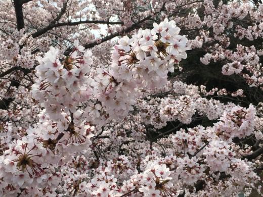 f:id:torimusi:20160403145711j:image