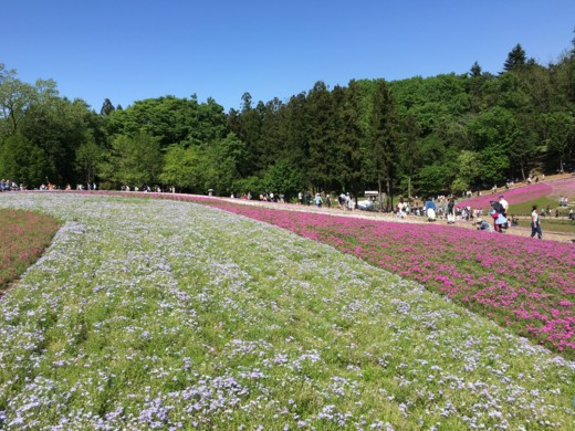 f:id:torimusi:20160505140425j:image