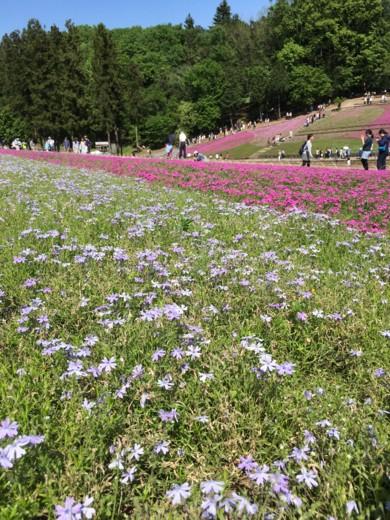 f:id:torimusi:20160505140440j:image