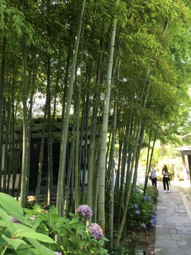 f:id:torimusi:20160701140233j:image
