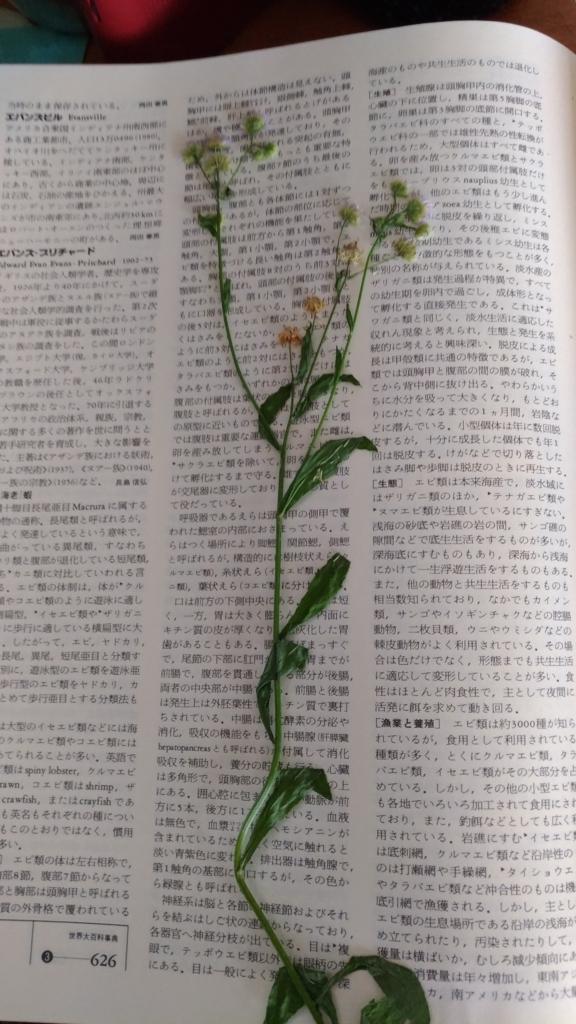 f:id:torisia001:20170730110258j:plain