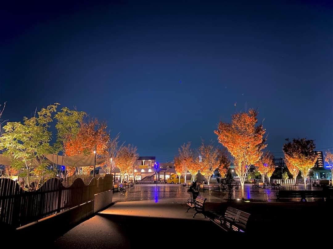 安満遺跡公園「夜の紅葉」