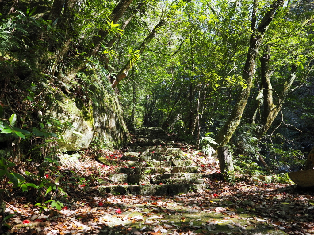 轟九十九滝の林道