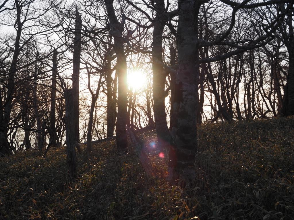 大台ヶ原 木々の隙間からの太陽
