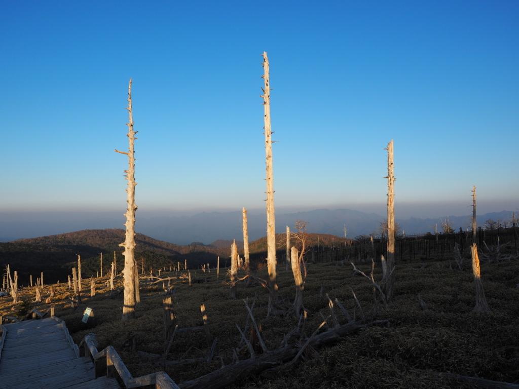 大台ヶ原 枯れ木のトウヒ