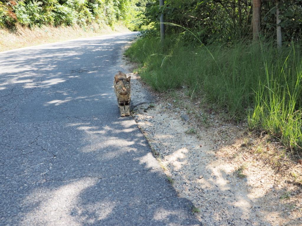 直島 島猫に遭遇