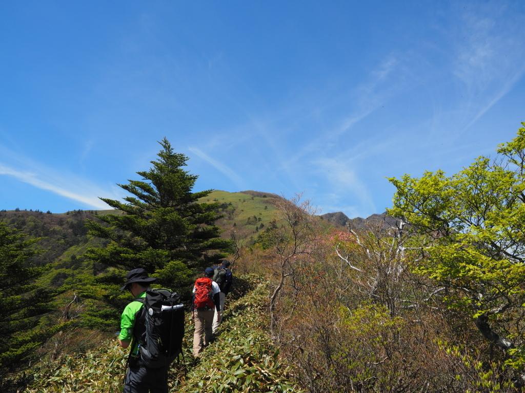 笹ヶ峰 ササだらけの稜線の始まり
