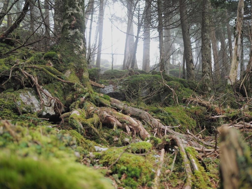 剣山登山 もののけ姫の世界感の一の森への道