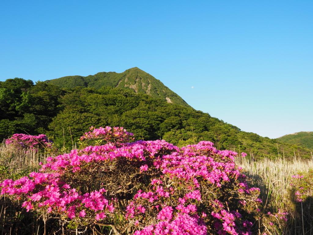 雨ヶ池越から見える三俣山とミヤマキリシマ