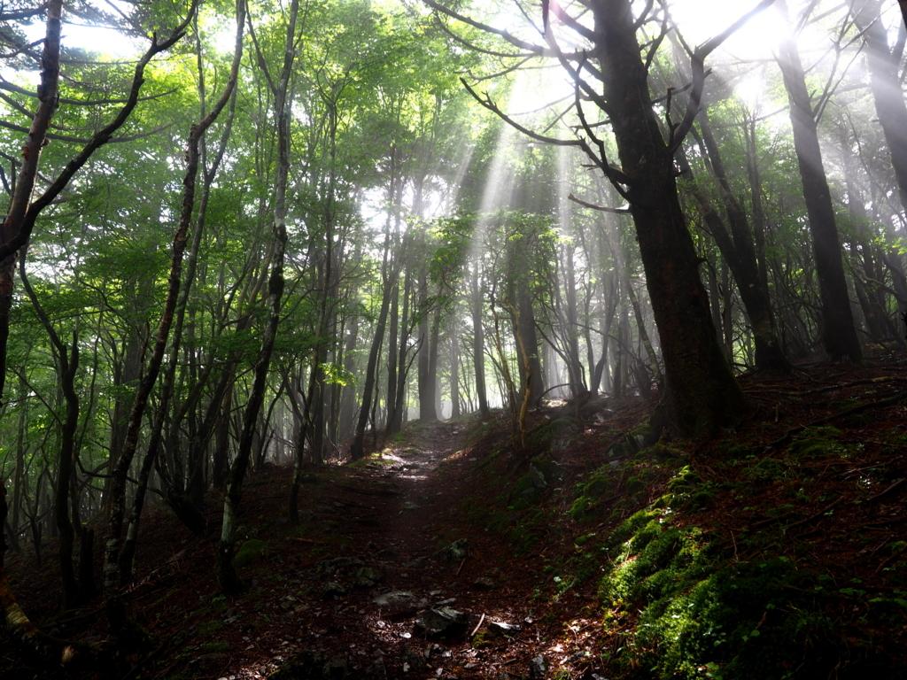 丸笹山 林道と光芒
