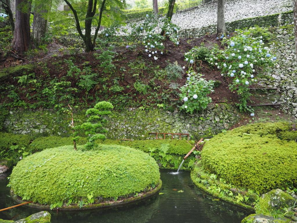 大龍寺の池