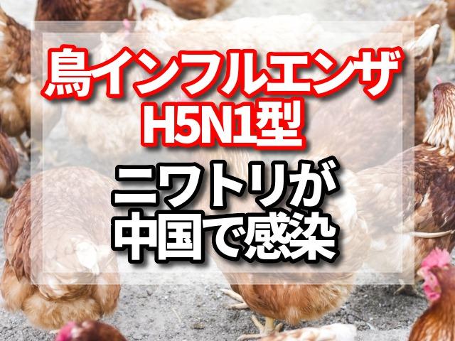 鳥インフルエンザ,H5N1