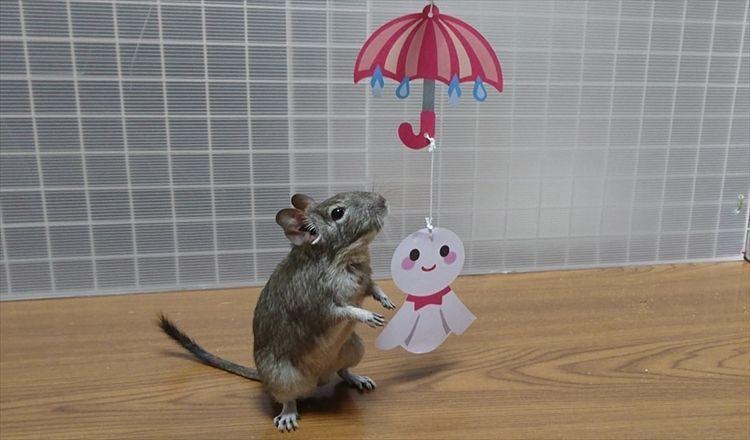 梅雨時期の対策
