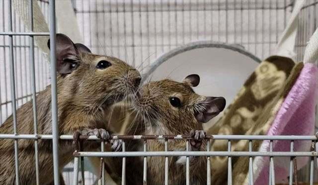 ペットの消臭・防臭・除菌対策