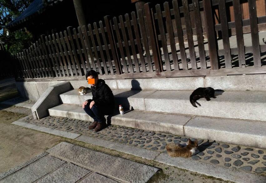 猫と黄昏れる社畜