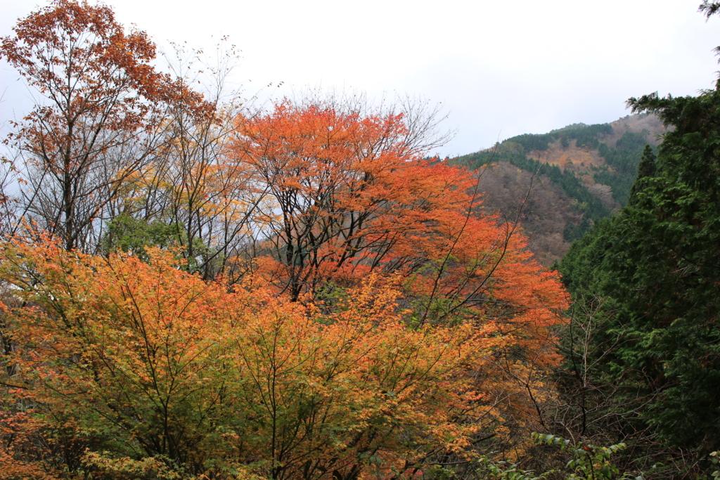 f:id:toshi-k-yuto:20161119225656j:plain