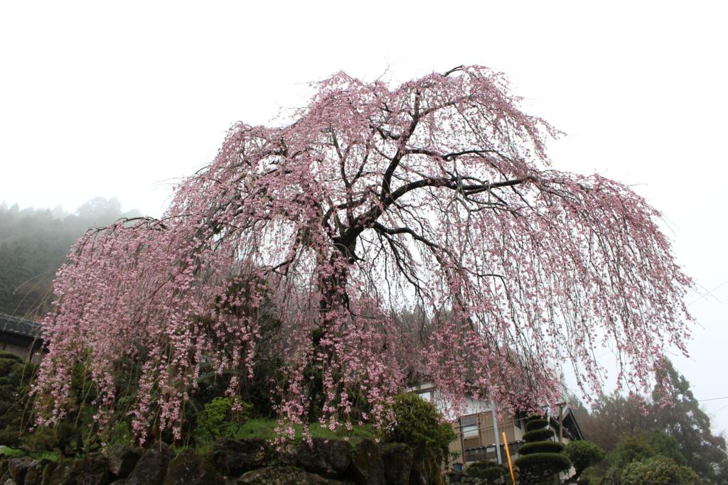 f:id:toshi-k-yuto:20170409174730j:plain