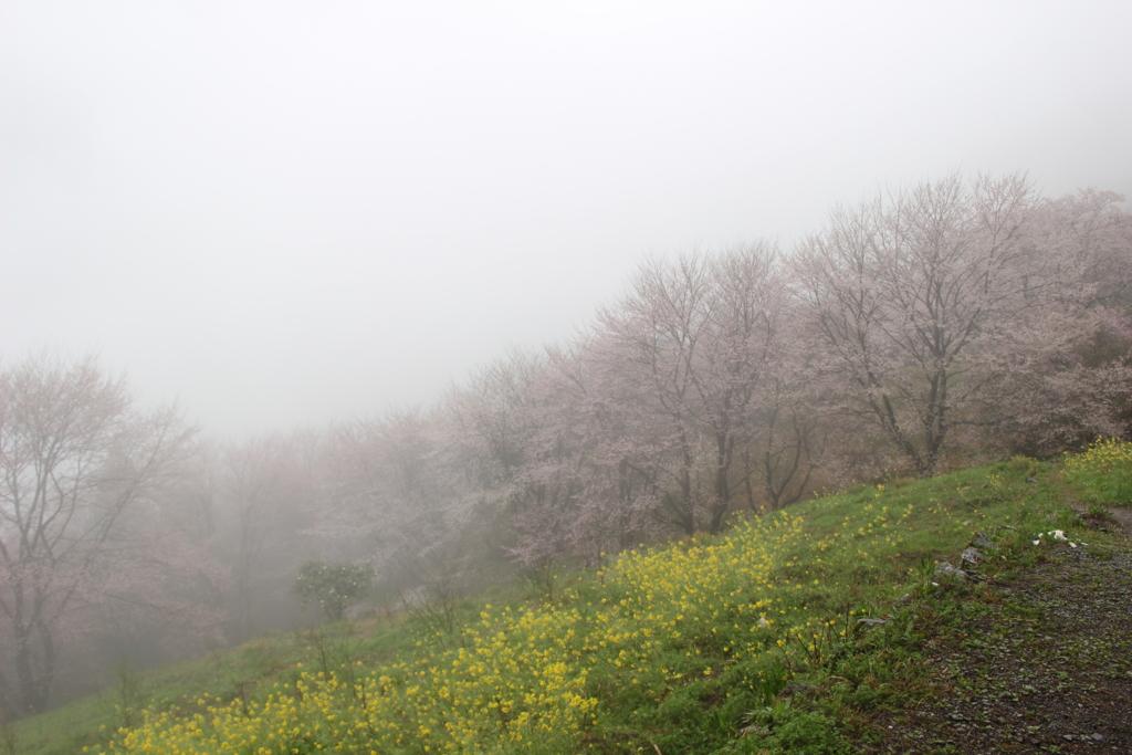 f:id:toshi-k-yuto:20170409185012j:plain