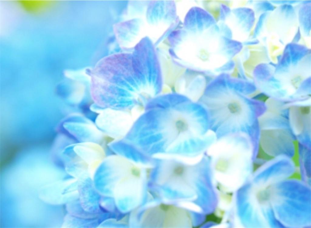 f:id:toshi-kuma25317:20170316154239j:image