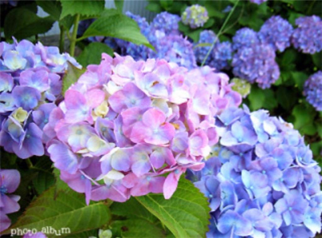 f:id:toshi-kuma25317:20170316154307j:image