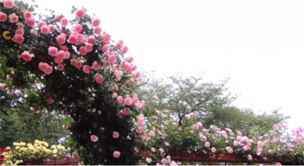 f:id:toshi-kuma25317:20180509110750j:image