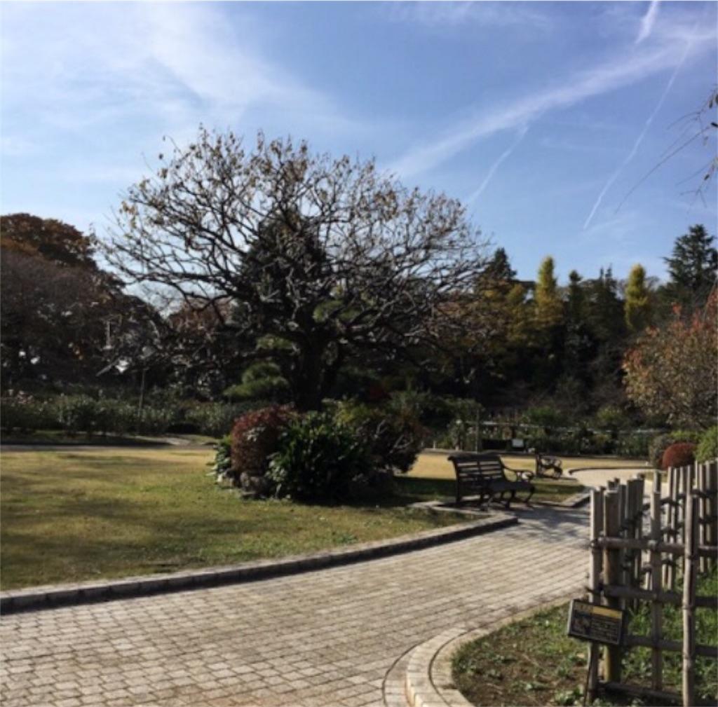 f:id:toshi-kuma25317:20180509111624j:image
