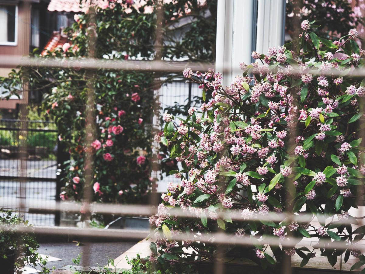 作例1 網越しの花