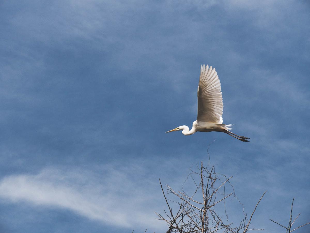 作例2 鷺が飛んでいる写真