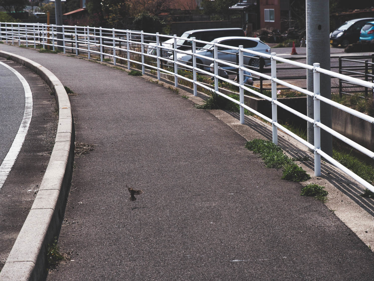 作例4 羽を広げて歩道におりたスズメ