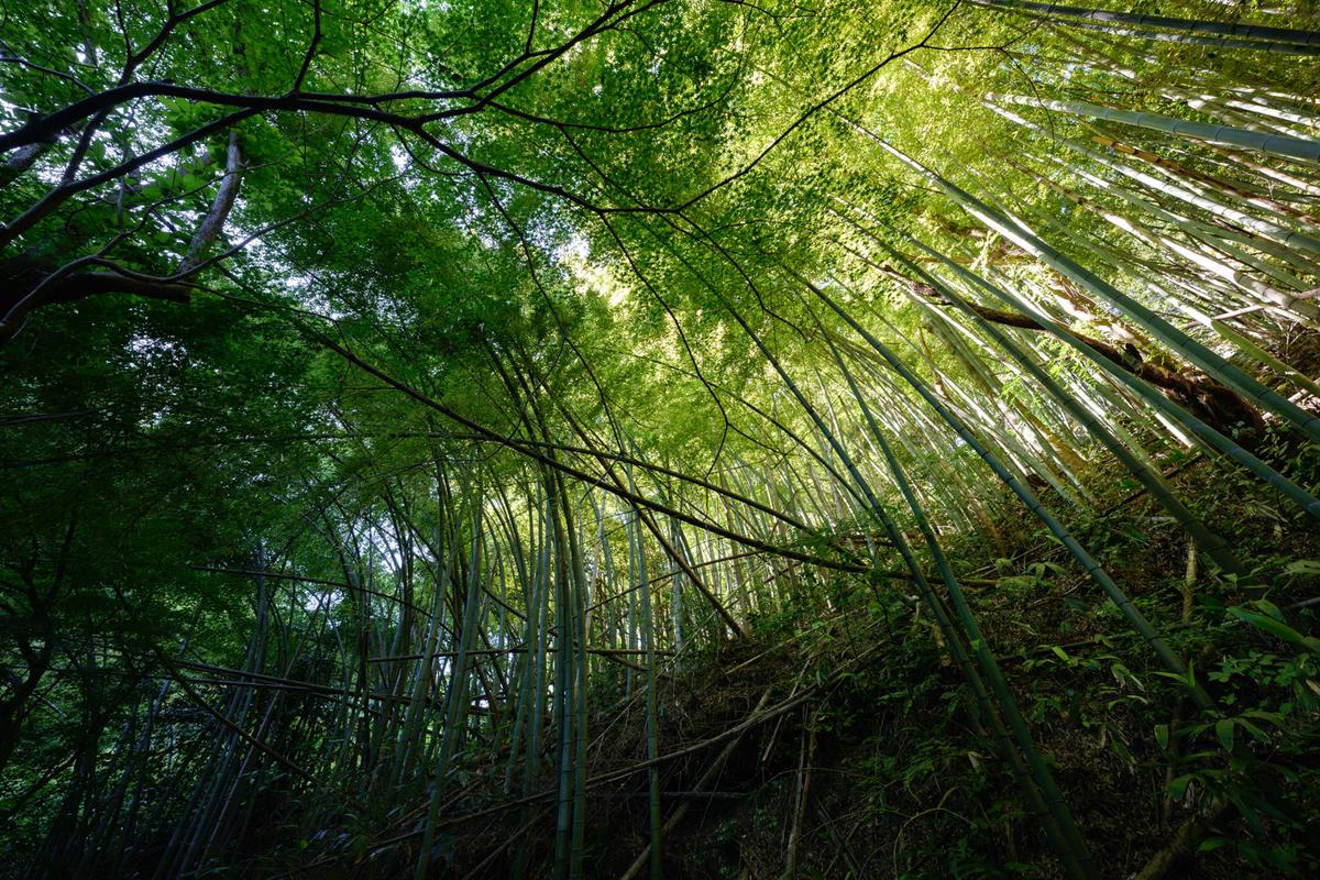 作例:竹林