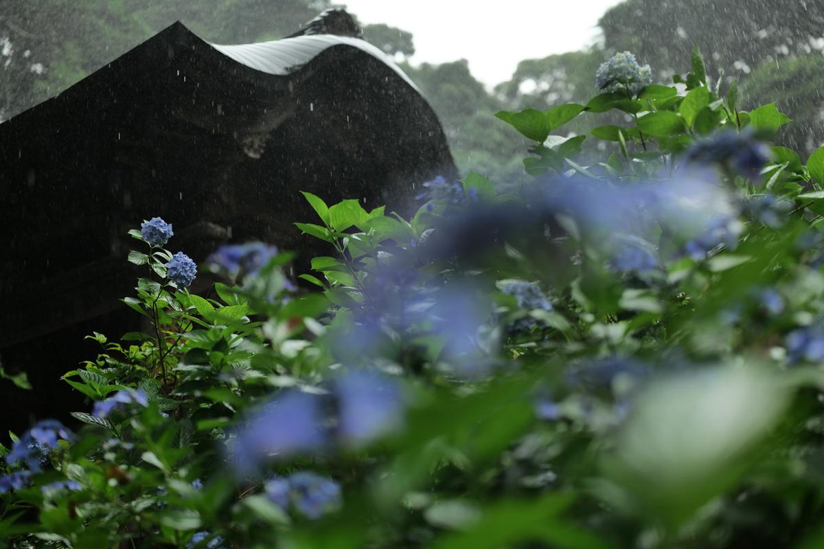 作例:紫陽花