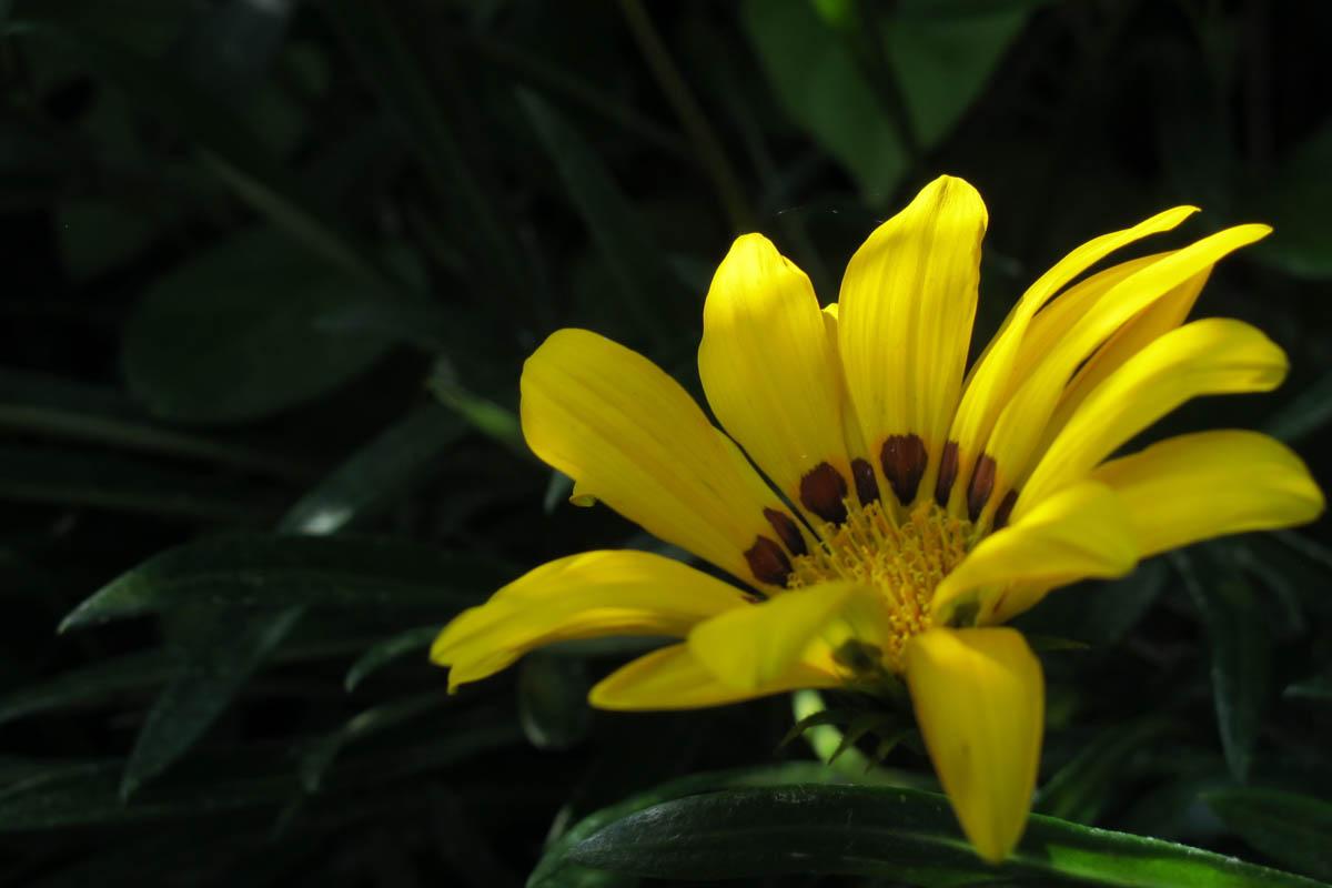 作例(花)